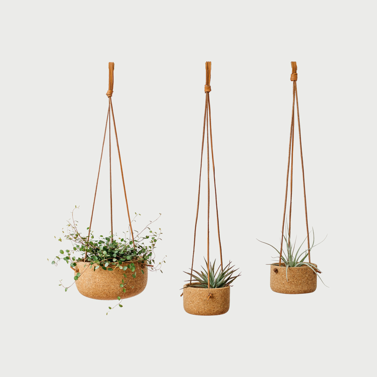 Hangingplanterplants