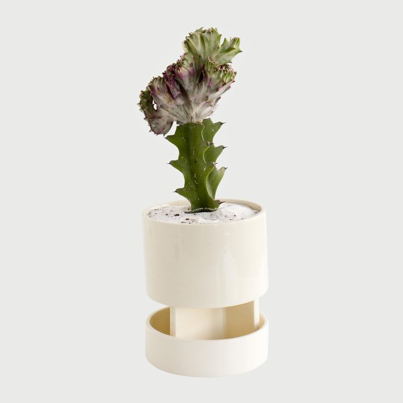 Architectural chromo white tray cactus
