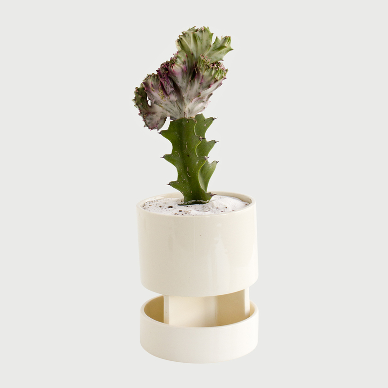 Architectural chromo white tray cactus