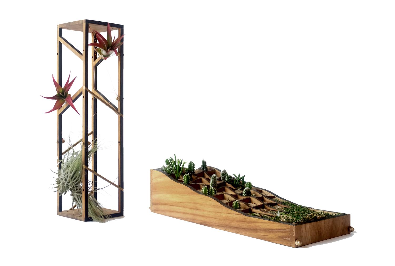 Plant in topo w air terrarium frameless