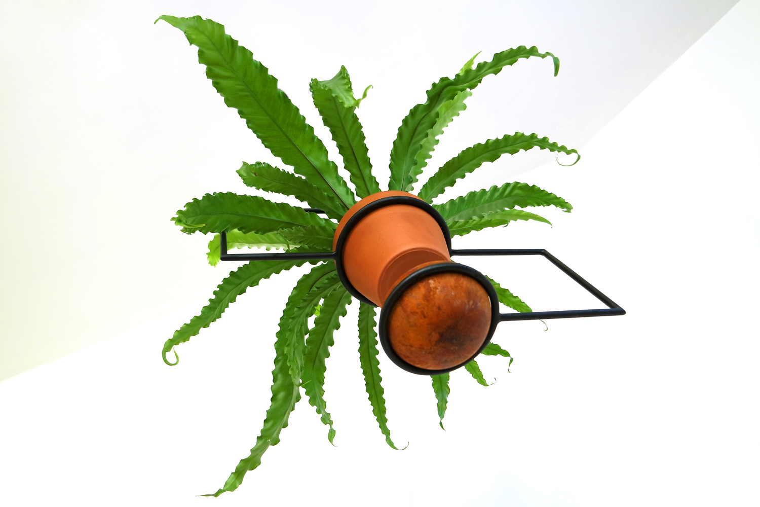 Line planter with fern 8